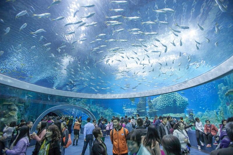 Quan sát sự đa dạng sinh vật biển