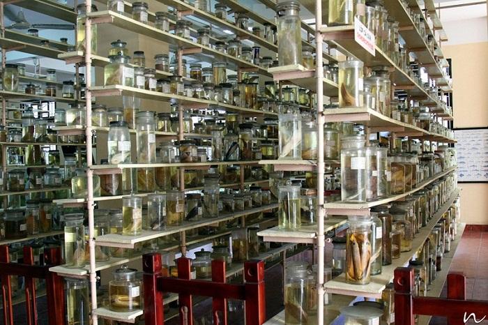 Kệ trưng bày mẫu vật