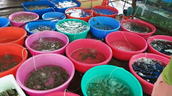 Hải sản tại chợ