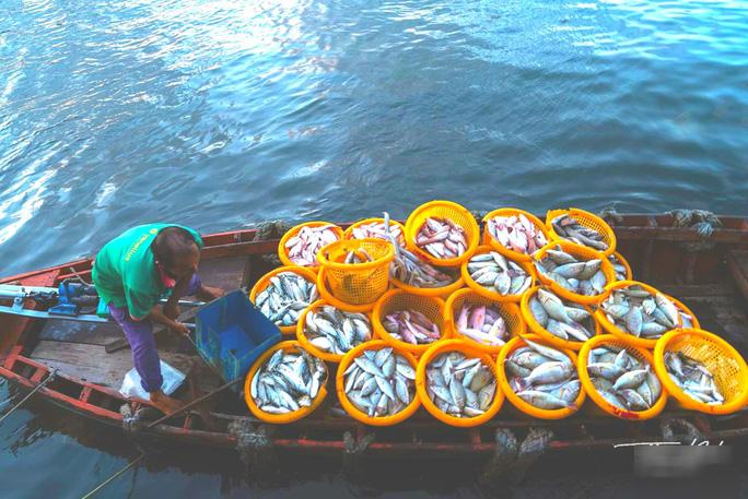 Thuyền đánh bắt cá về cảng