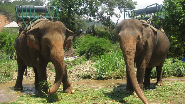 Tham quan vườn thú và cưỡi voi tại Thác Prenn