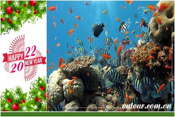 Tour du lịch Đà Nẵng - Cù Lao Chàm tết dương lịch 2022 (4N3Đ)