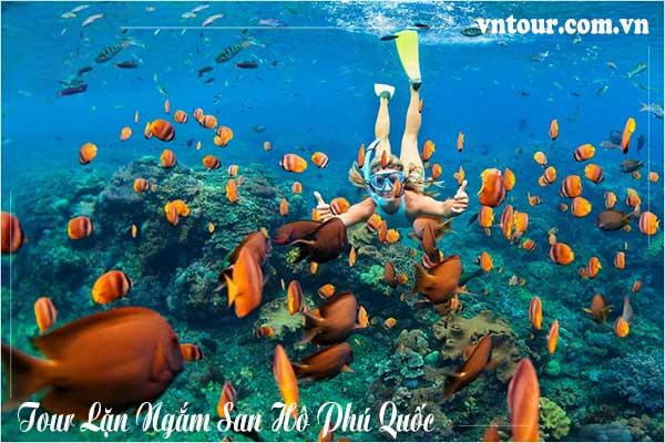 Tour Lặn Ngắm San Hô Phú Quốc 1 ngày giá rẻ