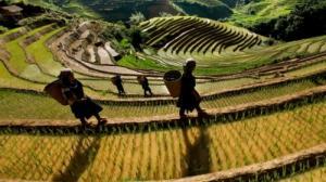 Tour du lịch Hà Nội 5 ngày 4 đêm (Mộc Châu - Mù Cang Chải)