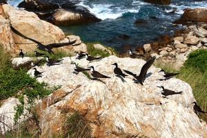 Hành trình khám phá vẻ đẹp độc đáo ở đảo chim
