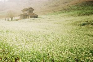 Du lịch Tết dương lịch lên miền Tây Bắc ngắm hoa săn mây