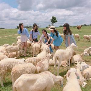 Tour du lịch Vũng Tàu 2N1Đ: Du thuyền Marina - Đồng Cừu Suối Nghệ