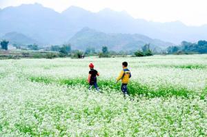 Những thiên đường hoa lãng mạn vào mùa Đông