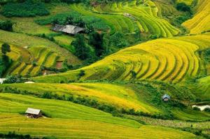 Tour du lịch Hà Nội - Yên Bái - Mù Căng Chải - Sìn Hồ - Sapa