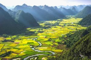 Du lịch Mùa Đông - chiêm ngưỡng những canh đồng lúc chín vàng rực