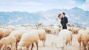 Tour du lịch Vũng Tàu 2N1Đ: Đồng Cừu Suối Nghệ - Bến Tàu Marina