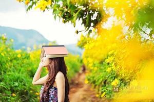 Lạc lối khi đi du lịch Đà Lạt vì mãi mê ngắm hoa dã quỳ