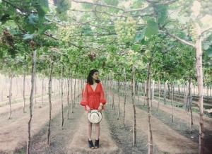 Bỏ túi kinh nghiệm du lịch Ninh Chữ