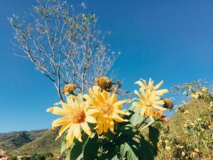 Tháng 11 Đà Lạt đẹp mê mẩn 3 loài hoa dại rực rỡ