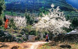 Tour Du Lịch Điện Biên Phủ - Mộc Châu - Sơn La 5 ngày 4 đêm: Thu Vàng Thương Nhớ