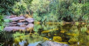 Vẻ đẹp hoang sơ, hùng vĩ và hữu tình của suối Đá Bàn Phú Quốc