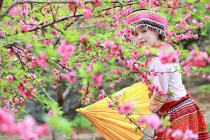 Có nên du lịch Sapa dịp Tết Nguyên Đán?