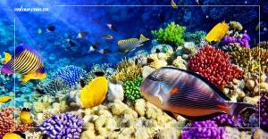 Tham quan Viện Hải Dương Học Nha Trang - Một đại dương thu nhỏ