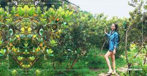Khám phá những vườn sim đặc sản tại Phú Quốc