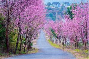 Top 5 mùa hoa tại Đà Lạt đẹp hơn cả Châu Âu- Thời gian và lưu ý