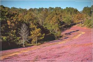 1000 góc chill ở những rừng thông đẹp nhất Đà Lạt
