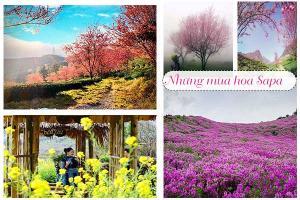 Ngắm các mùa hoa trên miền Sapa-Thời gian và review chi tiết