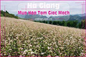 Yêu em thì về Hà Giang ngắm mùa hoa Tam Giác Mạch nhé!