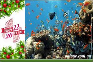 Tour du lịch Đà Nẵng Tết Tây 2022: Cù Lao Chàm - Hội An - Bà Nà